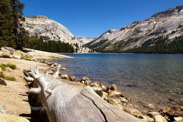 Log by Tenaya Lake