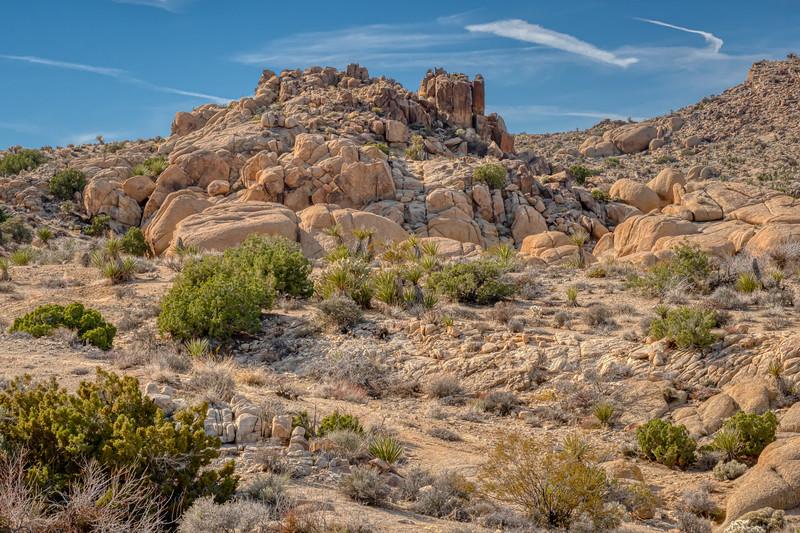 Along the trail, Joshua Tree