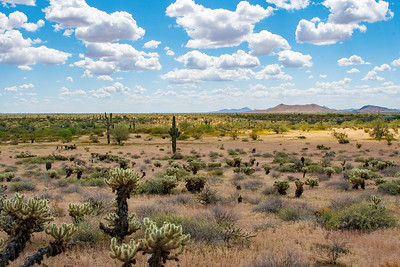Arizona Plains