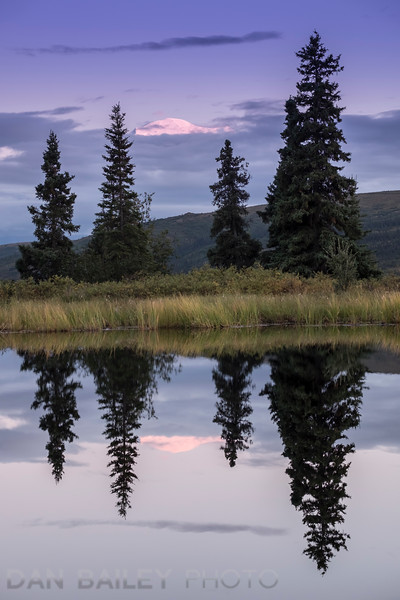 Sunset light on the summit of Mt. McKinley above the clouds, reflecting in a pond.