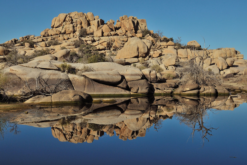 Reflections in Joshua Tree
