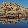 Reflections in Joshua Tree