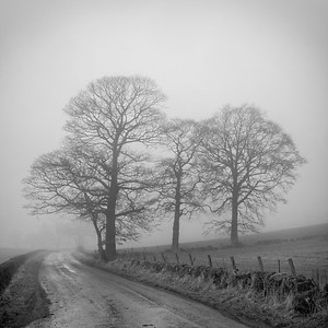 Arngask Trees