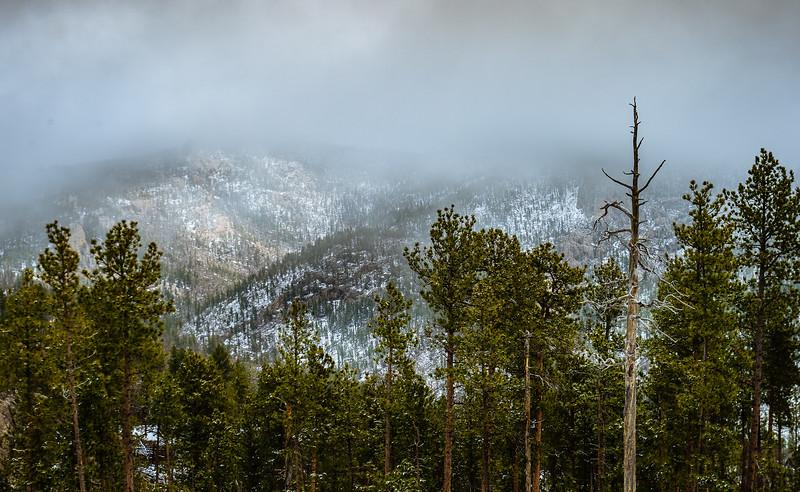 Custer State Park, Black Hills, South Dakota