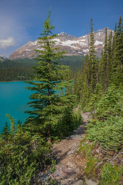 Painted pine along the trail at Lake O'Hara, Canada
