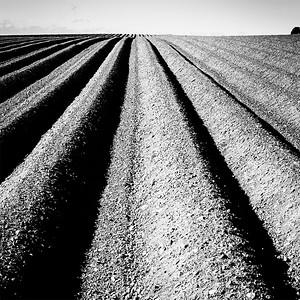 Furrowed Field 1