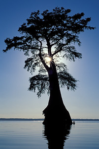 Great Dismal Swamp National Wildlife Refuge-Lake Drummond