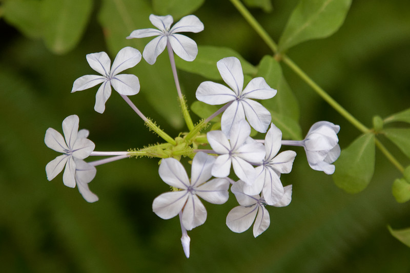 Hardy Flora