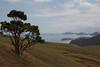 Manaia Bay, Coromandel Peninsula