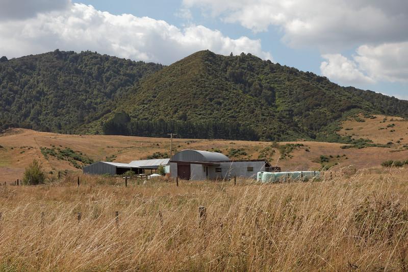Waikato Farmland