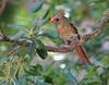 bird tree_3328