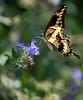 butterfly_3426