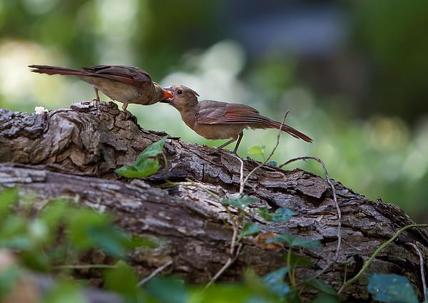 bird feeding_3372