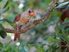 bird tree_3336
