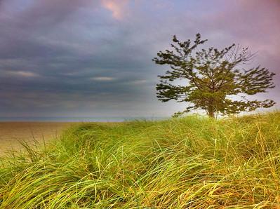 A Tree Grows on Sasco Beach