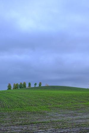 Høstkorn