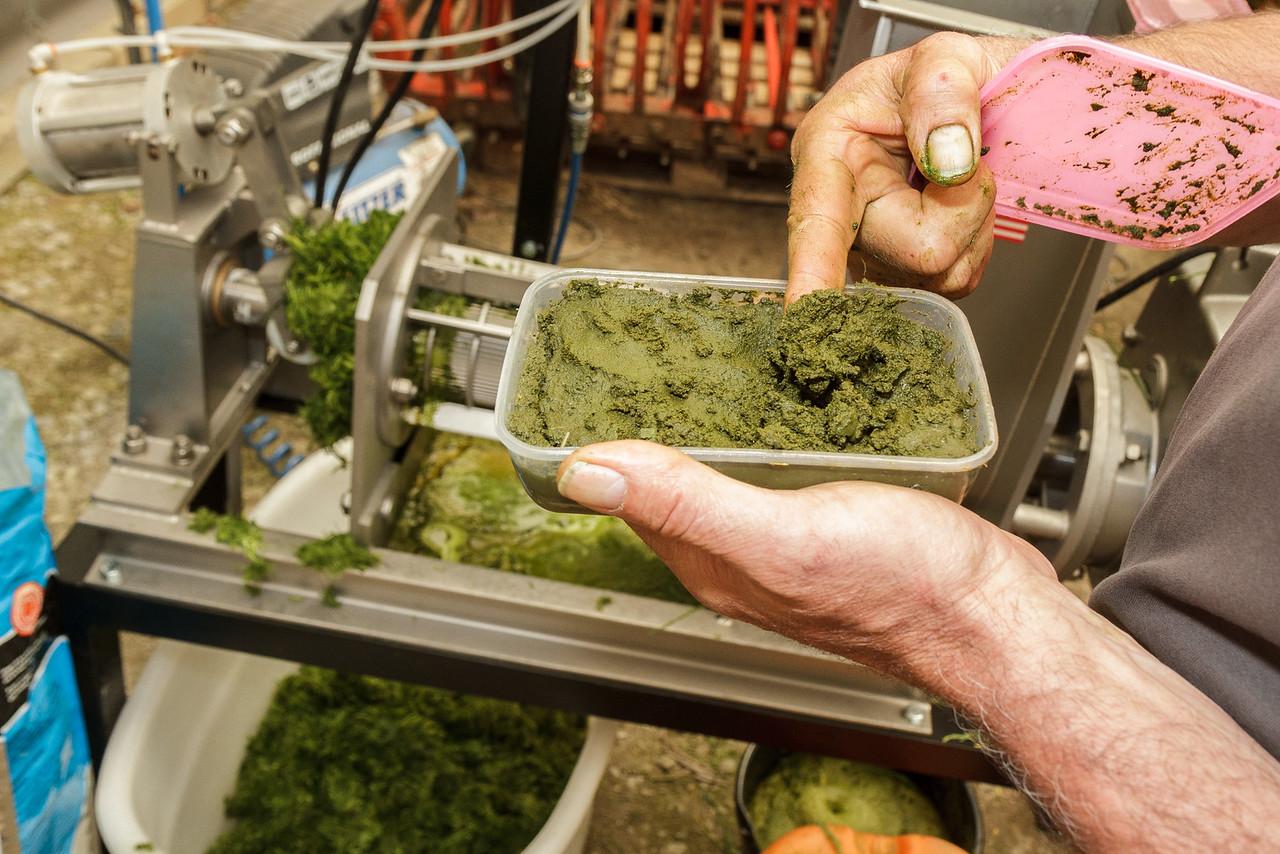 Proteinmasse etter sentrifugering av det proteinrike gress-saften