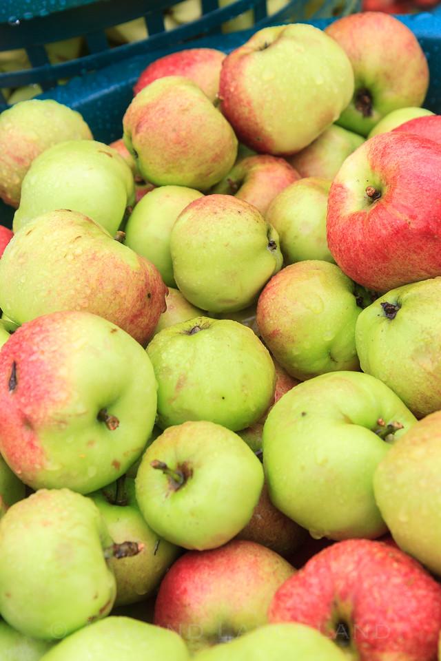 Epler til saftpressing