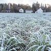 Høstrug dekket av rim etter første frostnatt