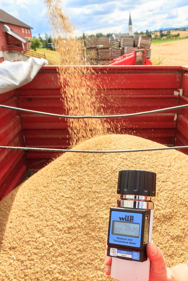 Måling av vannprosent i korn