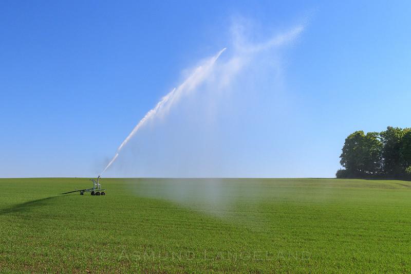 Vanning av korn