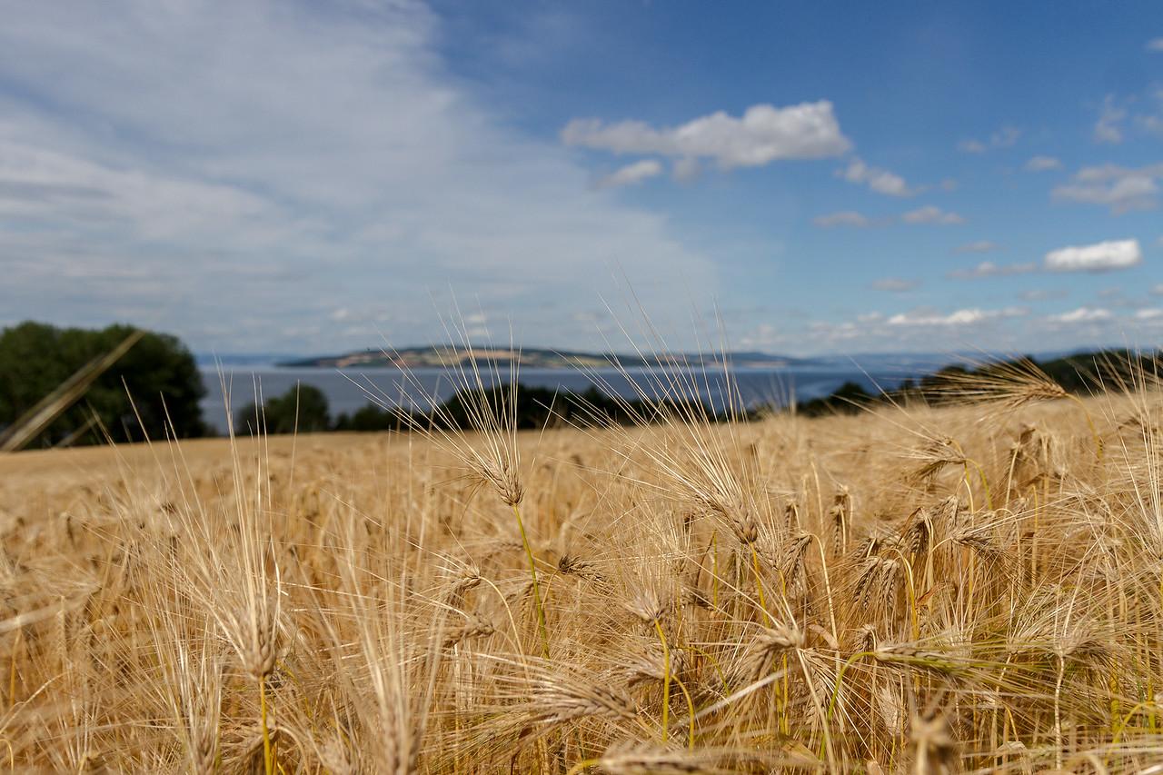 Kornåker på stange mot helgøya og mjøsa