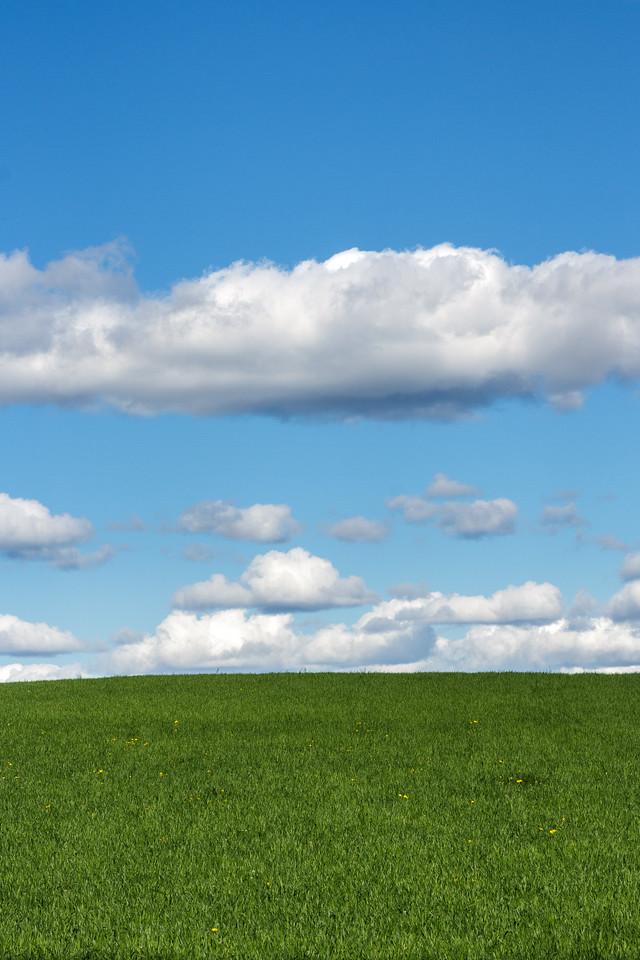 Grønn eng og blå himmel