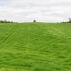 Ugjevn fordeling av nitrogen etter breigjødsling til bygg