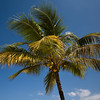 27.02.2013, Dominikanische Republik, Puerto Plata, Playa Dorada. Eine Kokospalme am Strand -Playa Dorada-.