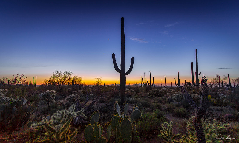 Silent Sonoran Sunset