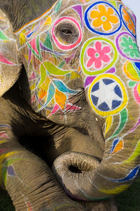 elephant curl-P1030053 copy