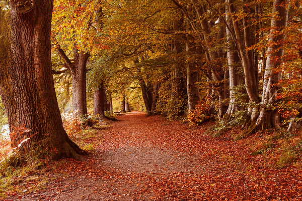Lady Mary's Walk, Crieff