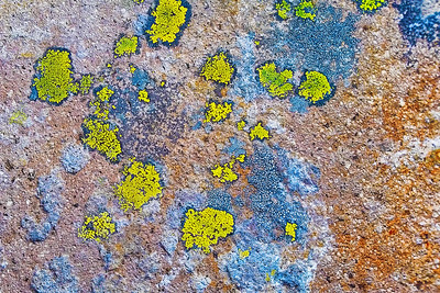 Landlines: Lichen | Mt. Rainier National Park