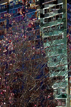 Organic / Inorganic:  Abstract No. 1 - Spring in New York City