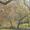A Light And Airy Place - Central Park In Spring