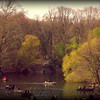 Boating on the Lake in Central Park New York City