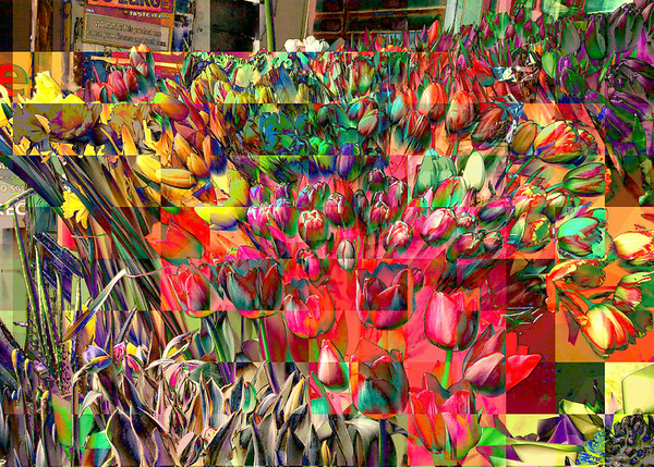 Tulips of Many Colors - New York City Outdoor Markets