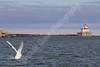 02-04-2012-Swan_Lighthouse-8840