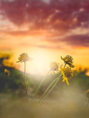 Baby Sunflower Love