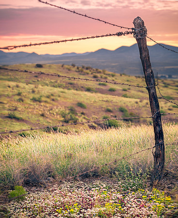 Barbed Wire and Wildflowers