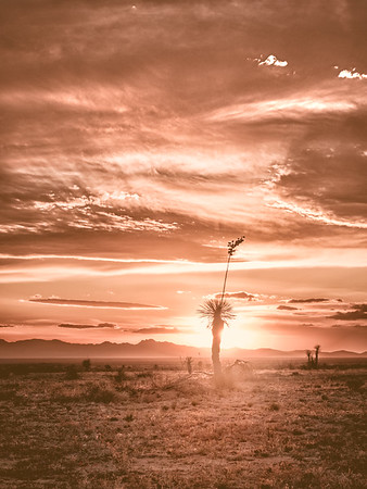 New Mexico Desert Silhouette