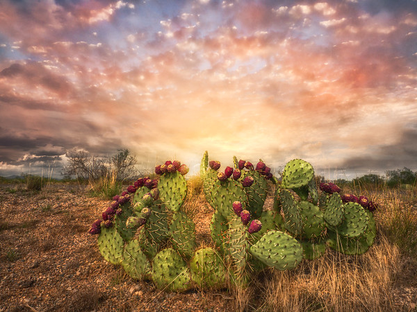 Prickly Pear Promises
