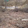 Sediment flowing through woods. Audrey Moore Rec Center.  9 Mar 2011