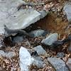 Undermined concrete conveyance channel  38.821948, -77.222760
