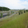 Reforestation planting.  Fairfax County Parkway extension 4 May 2012