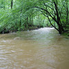 Accotink Creek in flood mode, due to increased amounts of impermeable surfaces in the watershed. Forests and natural areas absorb significant amounts of rainfall, reducing runoff.