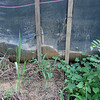 Failed sediment fence