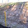 New cut in slope.  Outside I-495 north of I-495/Rt 236 interchange.  10 Nov 2010
