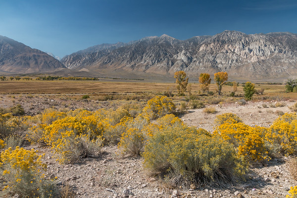 A Desert Landscape
