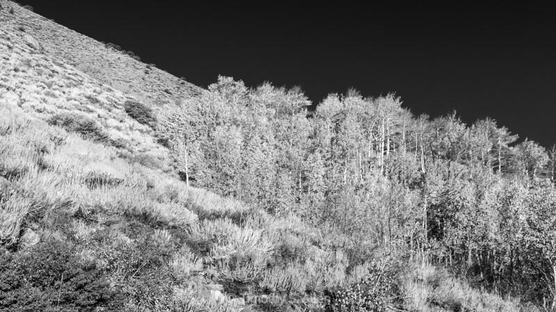 Aspens of Grant Lake